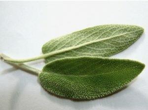 Sage 2-leaf