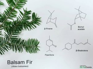 Firs profile and hydrosol jeanne rose aromatherapy blog balsam fir chemistry ccuart Choice Image