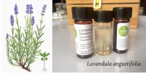 1.Lavender plant and oil