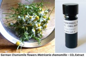 CO2 EXTRACT - Jeanne Rose Aromatherapy Blog