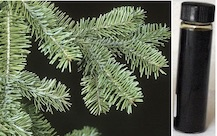 abies-balsamea-abs
