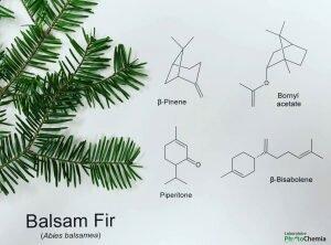balsam-fir-chemistry