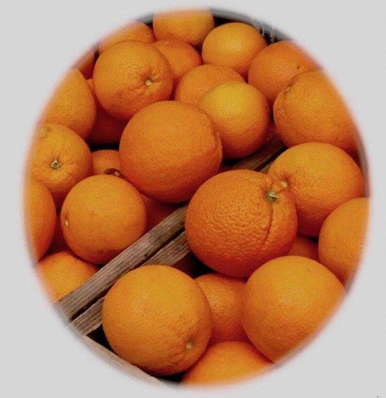 sweet California Navel Oranges in February